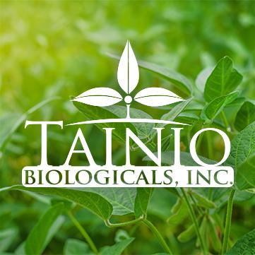 Tainio-Portfolio
